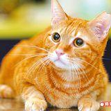 [新聞] 基本清潔法 讓愛貓更健康漂亮